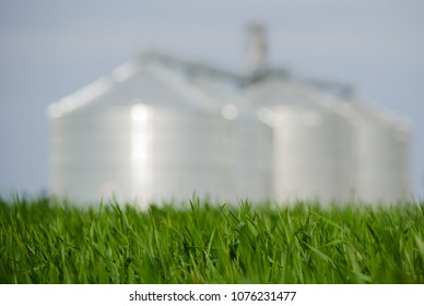 Green field in spring with four silos on the blurred background. Agrobusiness