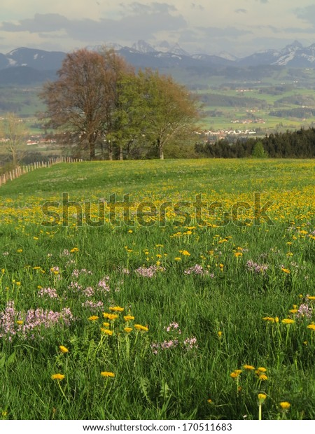 Green field with spring landscape