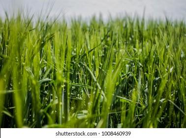 Green Field Spring Spirit