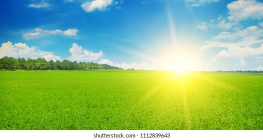 Green field and sun rise in the blue sky. Agricultural landscape. Wide photo.