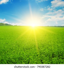 Green field and sun rise in the blue sky. Agricultural landscape.