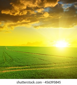 Green field with sunset sky. Spring landscape.