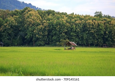 Green field in Thailand , Countryside