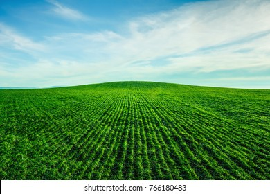 Green field towards the horizon. Green grass, sprouts of grain culture, parallel rows extend to the horizon of the earth and sky. Corresponds to the seasons: autumn, spring. Colors:white, blue, green.