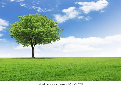 green field with an tree
