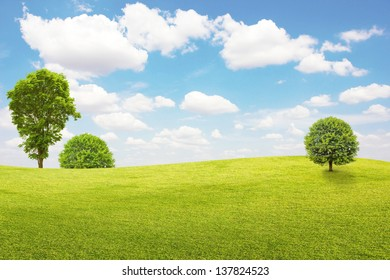 Green field and tree with blue sky and clouds