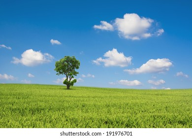 Green field and tree with blue sky cloud