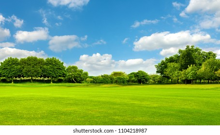 Green field, tree and blue sky.Great as a background,web banner