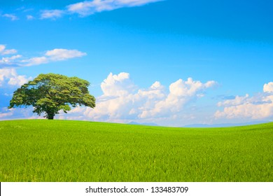 Green field and tree on clear blue sky