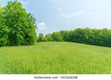 Green field with trees and blue sky