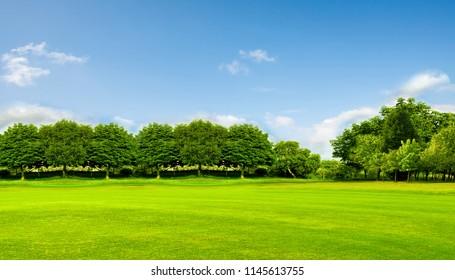 Grünes Feld, Bäume und blauer Himmel. Großartig als Hintergrund, Webbanner