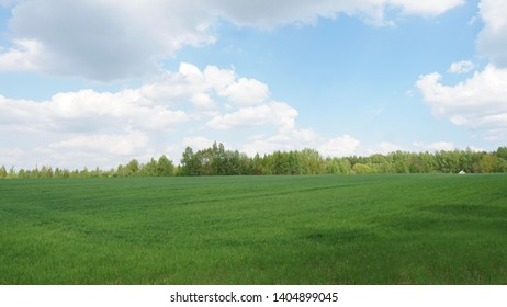 Green field, trees and blue sky.Great as a background