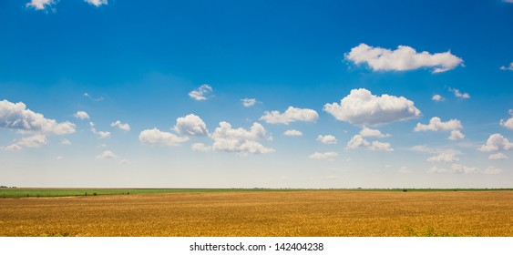 Green field under beautiful dark blue sky.Field of grass and perfect blue sky.hilly field with fluffy white clouds in the blue sky.Landscape of field and sky.Wheat field over cloudy sky