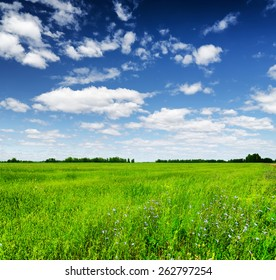 Green field under the blue sky with white clouds. Forest visible on the horizon. Beautiful summer landscape.
