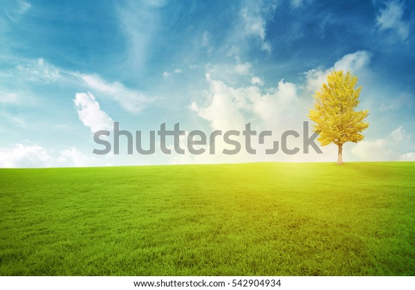 Green field under blue sky Beauty nature background with sunlight
