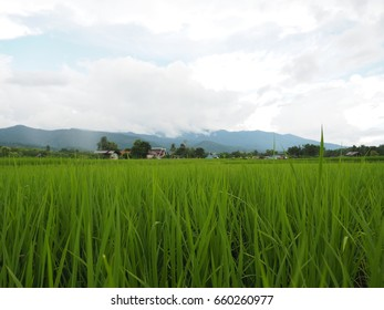 Green field under the cloudy sky, Thailand