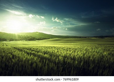 Green field of wheat in Italy