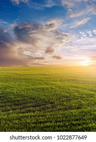 Green field of winter wheat, blue sky and sunset