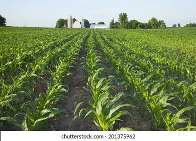 A green field of young corn plants with a farm in the background