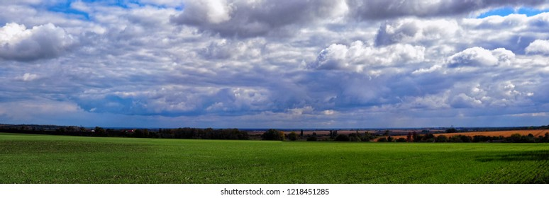 green field of young wheat against the blue sky and trees in the background. Wide panorama.