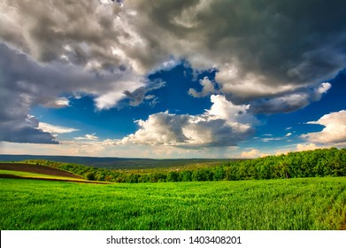 Green field of young wheat in early summer with cloudy sky before the rain