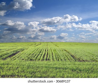 Green field,blue sky background