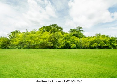 Green fields and beautiful trees, clear morning sky