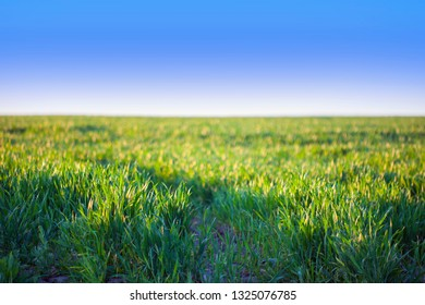 Green fields and blue sky