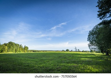 Green fields and blue sky in the summer with trees and sunshine