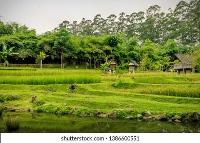 The Green Fields at Dusun Bambu, Bandung, Indonesia