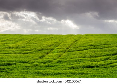 Green fields with morning clouds