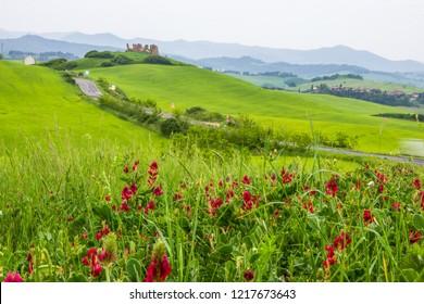 green fields near Volterra in Tuscany