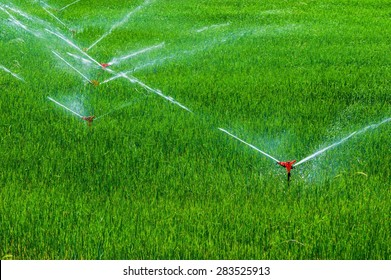 Green fields on irrigated