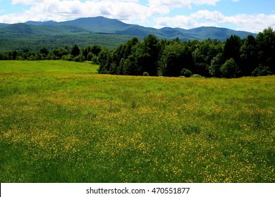 Green fields scattered with yellow flowers, green trees and mountains under blue sky, summer time, Vermont, USA