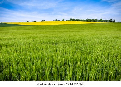 Green fields and sky. Grass field, panoramic view of farmlands, spring landscape.