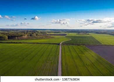 Green fields in spring evening.