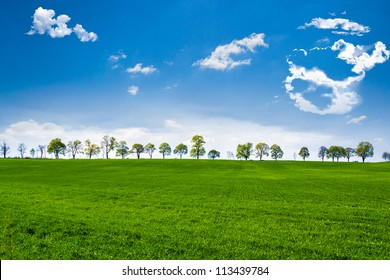 Green fields with trees on the horizont, under blue sky