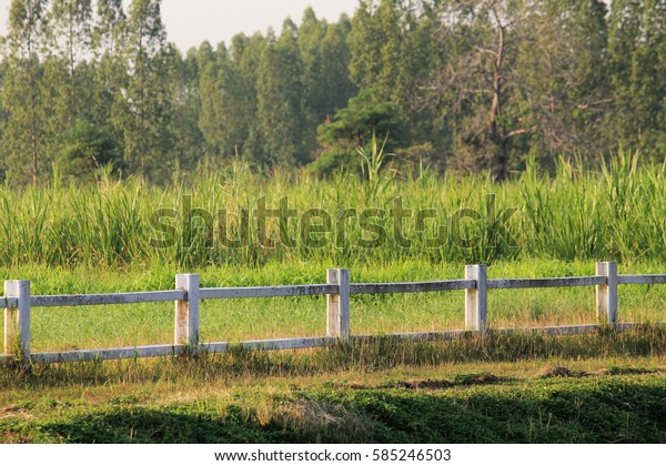 Green fields and white fences.