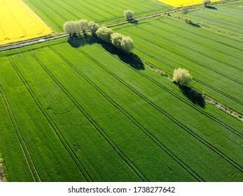 Grüne Felder in Zulawy Wislane, Polen