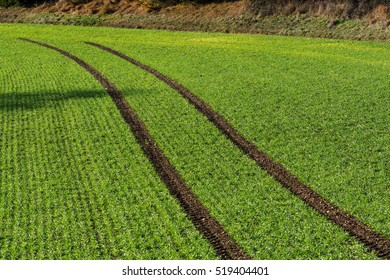 Green field.Tractor track.