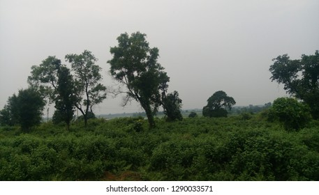 green filed of paddy grains in Jharkhand in India.