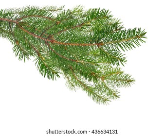 green fir branches isolated on white background