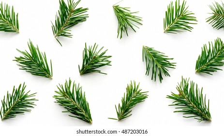 Green fir pine twigs background. Arrangement evergreen branch pattern. Christmas and new year decoration