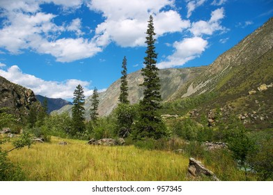 Green firs and blue skies on the Altay mountains