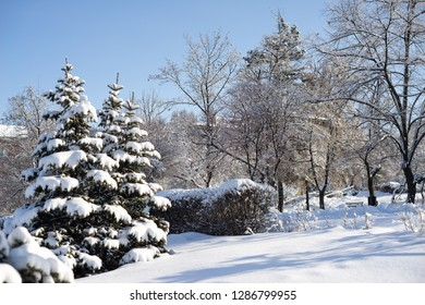 Green fir-tree covered with heavy snow in park