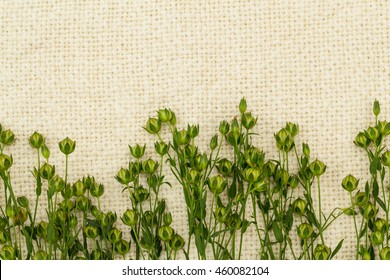 Green  flax twigs with linseed on the natural linen fabric background, close up