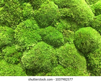 Green flora in spring