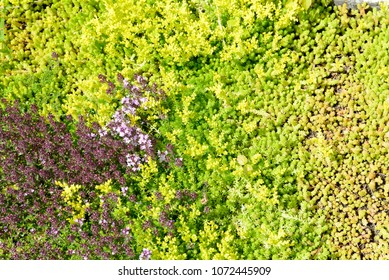 Green floral carpet