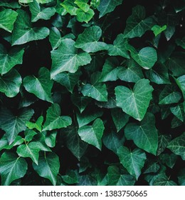 Green floral pattern of leaves. Natural background from above. Top view