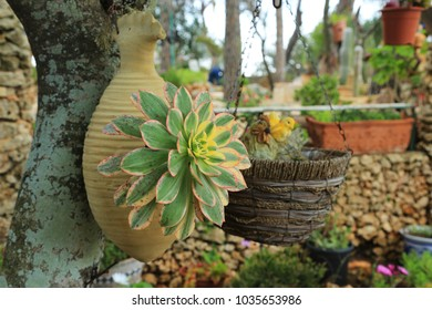 A green flower grows from a clay jug hanging on a tree